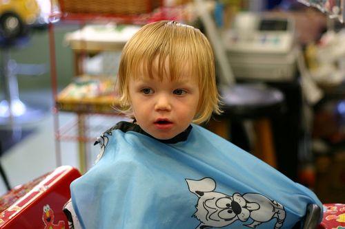 Teddy_haircut_halfway
